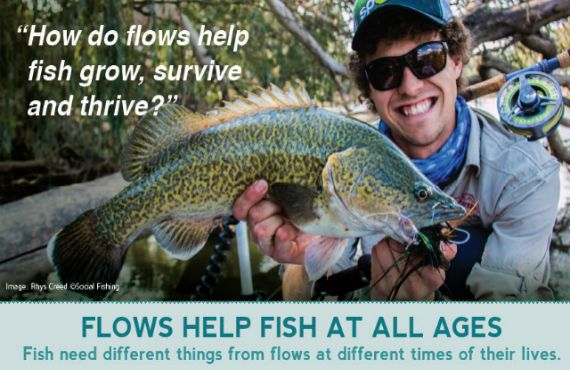 How do flows help fish grow, survive and thrive?