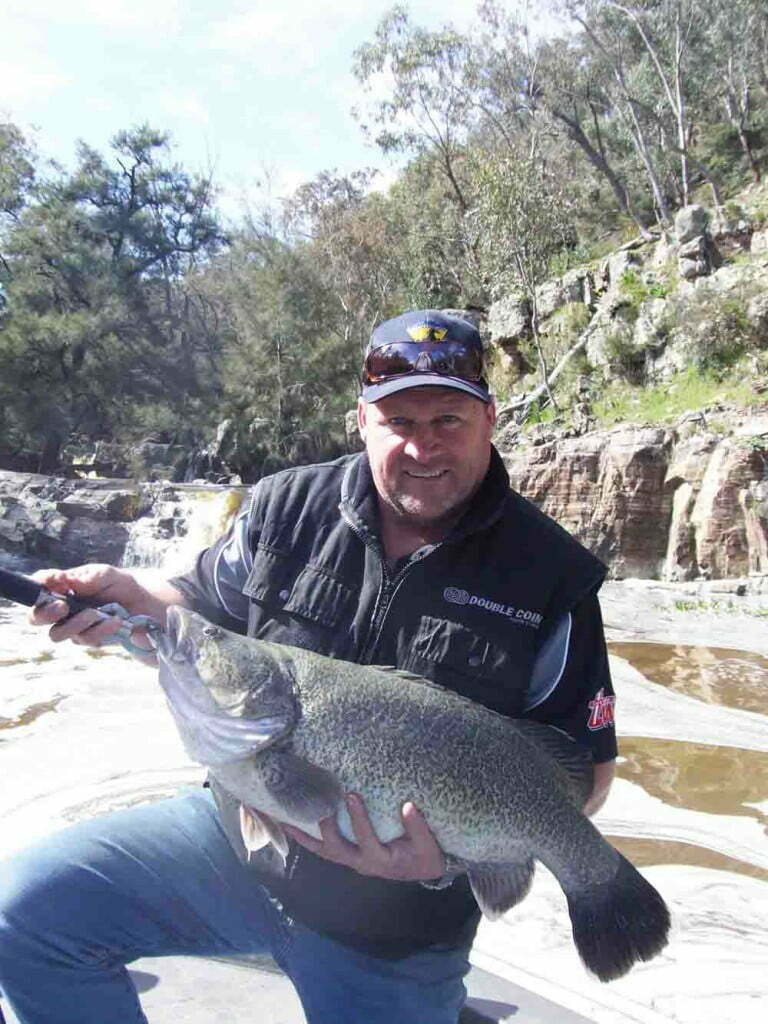Many of our native fish species including the iconic Murray Cod undertake migrations up and downstream at various stages in their life cycle (Photo Jamin Forbes)