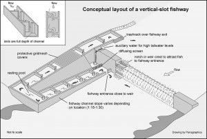 Conceptual layout of a vertical slot fishway